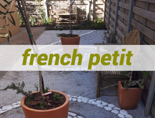 French Petit